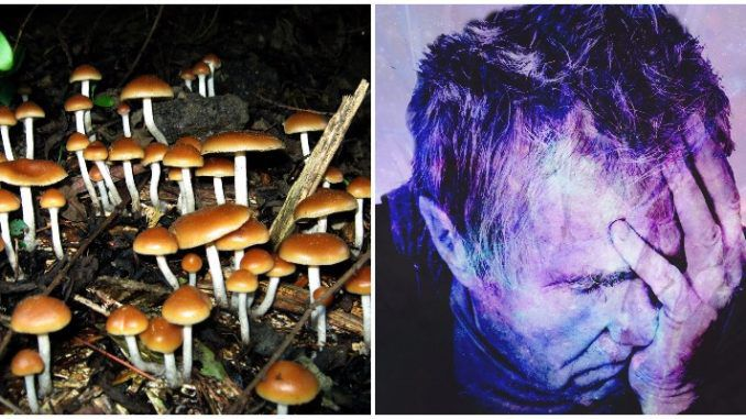 Study suggests mushrooms cure depression