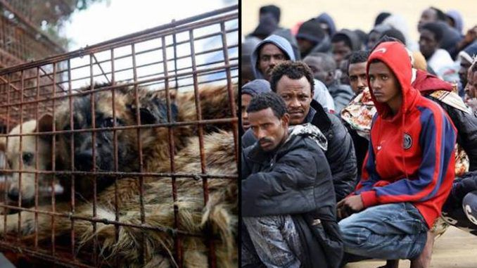 Italians left horrified after migrants barbecue local pet dogs