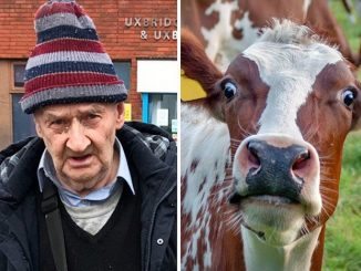 An 80-year-old man has been banned from every farm in Britain after being found guilty of outraging public decency by molesting cows.