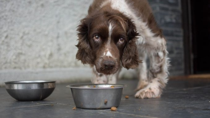 Following a mass recall of its products, a pet food company has been caught using recycled pets as cheap protein in its popular dog food.