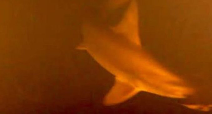 Scientists panic as mutant sharks discovered beneath underwater volcano