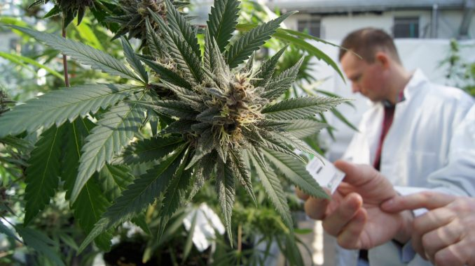 Big Pharma company to hold patent on CBD, THC as cancer cures