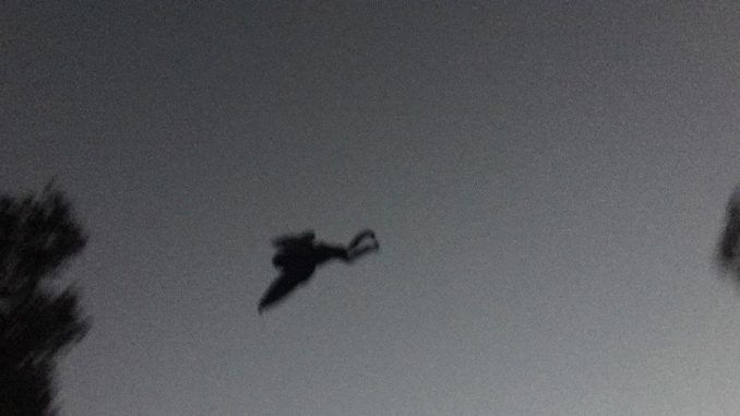 Thousands of residents in Chicago witness The Mothman