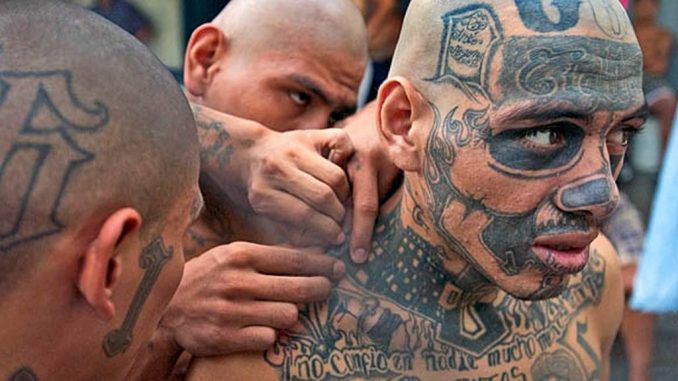 "MS-13, the notorious street gang dubbed ""the world's most feared"" is allegedly sacrificing underage American girls in ""Satanic rituals""."