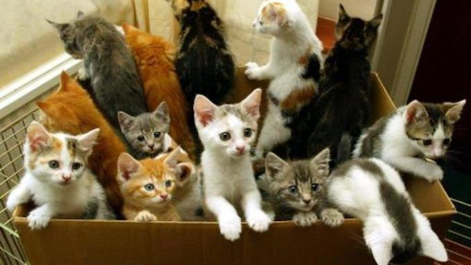 """The USDA has been experimenting withand executing """"hundreds of kittens"""" every year since 1982 as part of a cruel ongoing medical study that animal rights activists claim is """"inhumane"""" and """"completely unjustifiable."""""""