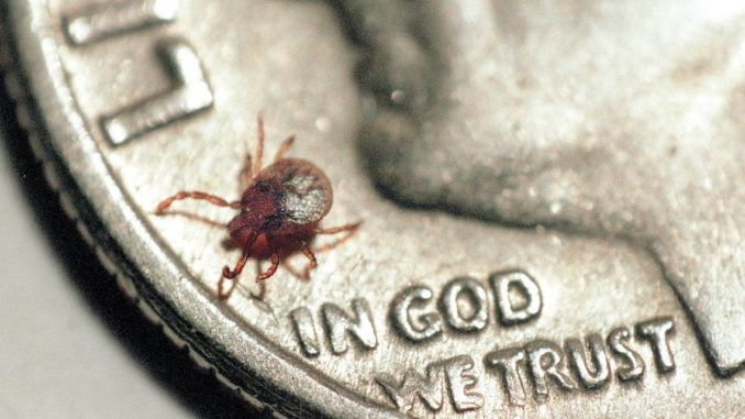 GMO tick invades USA, spreading diseases