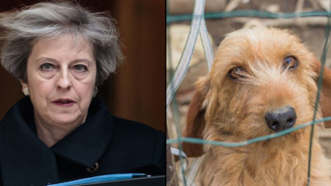 MPs have voted to reject the inclusion of animal sentience into the EU Withdrawal Bill - a move one group says undermines Michael Gove's high animal welfare pledge.