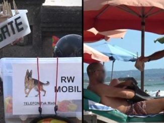 Dogs in Bali are being taken off the streets and killed to be sold to tourists disguised as chicken in meals, according to a new investigation that reveals the shocking scale of the illegal dog meat trade on the island.