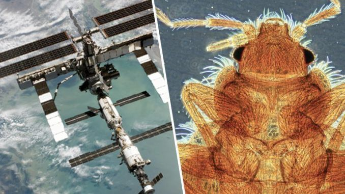 "Stunned scientists have discovered a thriving ecosystem of ""infectious organisms"" aboard the International Space Station and have ordered urgent tests to determine if the ""space bugs"" are virulent enough to cause health problems for astronauts."