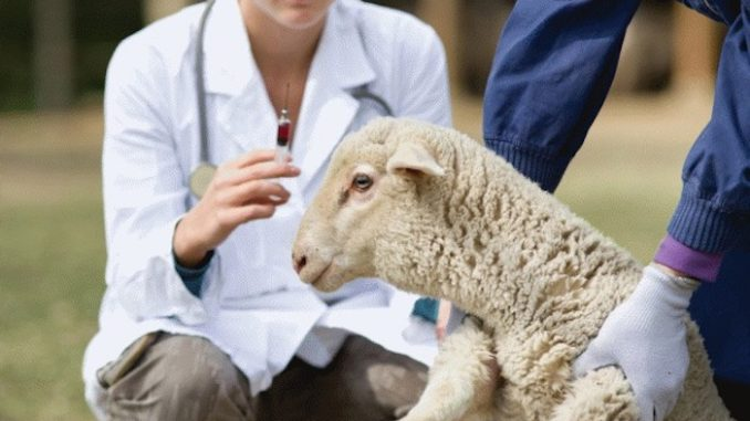 Spanish sheep study shows aluminum from vaccines remain in lymph nodes one year after injection