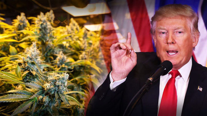 Facebook begins banning hemp pages after Trump signed Farmers Bill