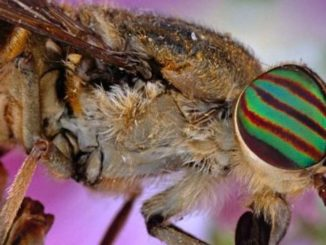 DARPA plans on creating conscious robots using insect brains