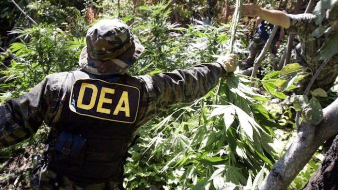 DEA admits nobody has ever died from cannabis overdose
