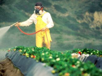 Washington University confirms link between Roundup and increased risk of cancer