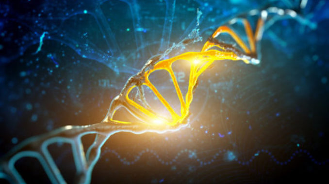 Harvard scientists discover DNA switch that allows whole-body regeneration
