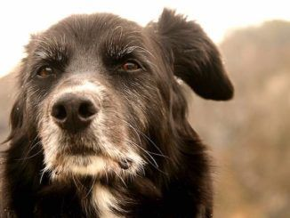 Dogs have distinct personalities that resemble their owners and also change over time as the animal matures, according to a new study.
