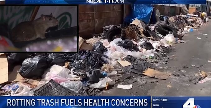 Rotting trash in LA attracting rats and fears of epidemic, NBC report finds