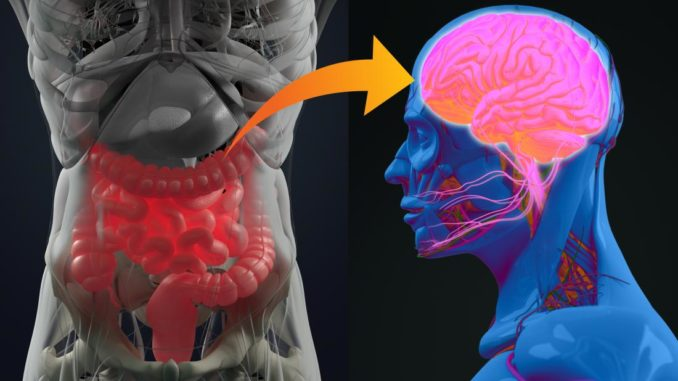 New research suggests connection between gut-brain bacteria and autism