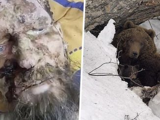 A Russian man surived for one month in the cave of a brown bear that had overpowered him and was planning to eat him.