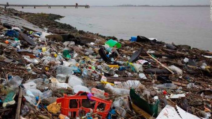 The average person now swallows five grams of plastic each week — the same amount of plastic as a credit card, according to a WWF study.