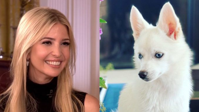 Ivanka Trump accused of racism by liberals for giving her daughter a white dog