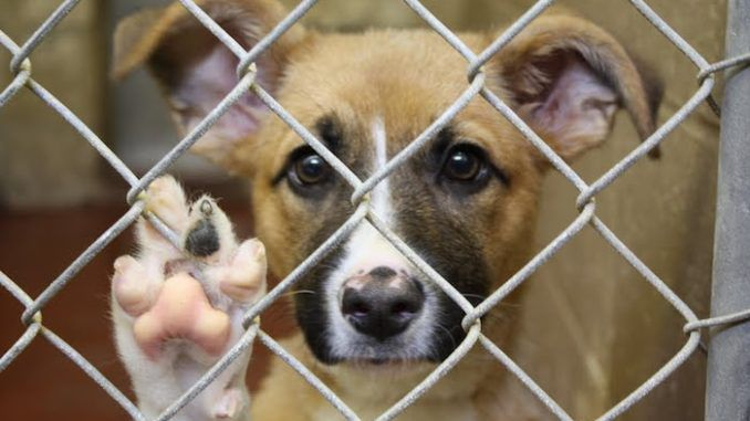 House passes bill making animal cruelty a federal criminal offence