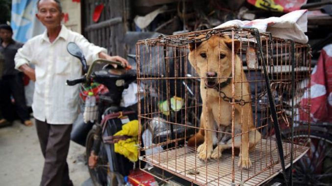 China increases its dog meat consumption amid pork shortage