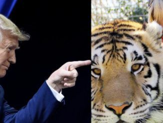 President Donald Trump has vowed to look at pardoning Joe Exotic, the star of the hit Netflix series 'Tiger King' who is serving 22 years behind bars in a federal prison for a murder-for-hire plot.