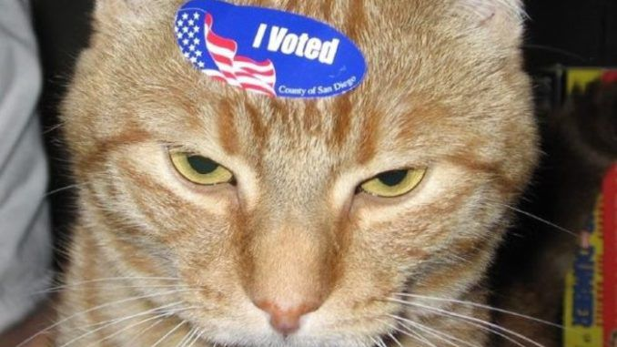Dead cat in Georgia receives voter registration form by mail