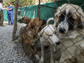 Animals rights groups say that the US has handed 'death sentences' to dozens of dogs left behind in Afghanistan.