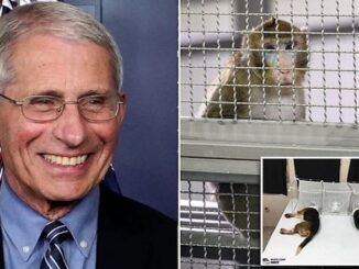 Fauci's NIH performed cruel and evil experiments on monkeys